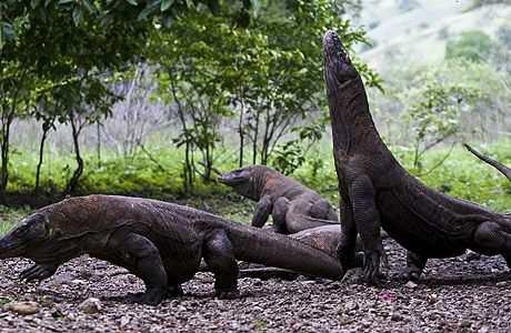 Индонезийский Национальный парк Комодо
