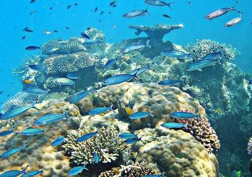 1500 видов рыб обитает в водах Барьерного Рифа